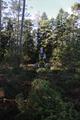 Wartenberg Landenhausen John Deere forest harvester f.png