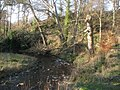 Water of Leith - geograph.org.uk - 330034.jpg