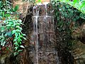 Waterfall in Bolz Conservatory - panoramio.jpg