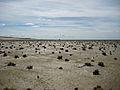 Wattenmeer Sylt.jpg