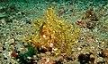 Weedy Scorpionfish (Rhinopias frondosa) (6059580634).jpg