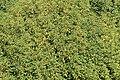 Weener - Hessepark - Hessepark + Prunus lusitanica 04 ies.jpg