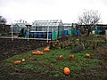 Weghill Road Allotments - geograph.org.uk - 298231.jpg