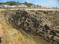 West-Beach-rocks-20170117-003.jpg