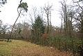 Western edge of Stock Wood - geograph.org.uk - 642165.jpg