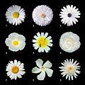 White flowers a.jpg
