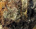 Whitmoreite, Beraunite, Rockbridgeite-386705.jpg