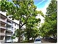 Wißstraße - panoramio.jpg