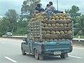 Wiang Sa, Wiang Sa District, Surat Thani, Thailand - panoramio.jpg