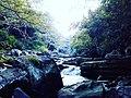Wildlife Waterfall.jpg