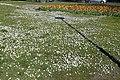 Wilhelminapark, Breda P1360762.jpg