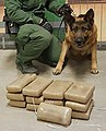 Willcox Border Patrol Agents Nab Cocaine and Human Smugglers (31561600074).jpg