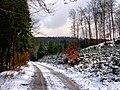 Winter im Teutoburger Wald27.jpg