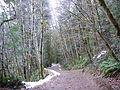 Winter path at Stamp Falls Provincial Park.JPG