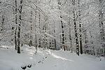Winterzeit im Sauerland (3301094369).jpg