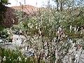Wishing Tree- Charyn Canyon - panoramio.jpg