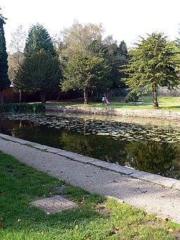 Witton park lily pond - panoramio