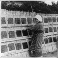 Woman placing seaweed, which is an important item of the Japanese diet, on rack to dry, Japan LCCN2001705652.tif
