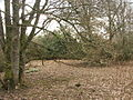 Woodland - geograph.org.uk - 137522.jpg