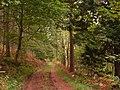 Woodland Track - panoramio.jpg