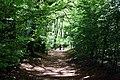 Woodland track on Watlington Hill - geograph.org.uk - 1288904.jpg