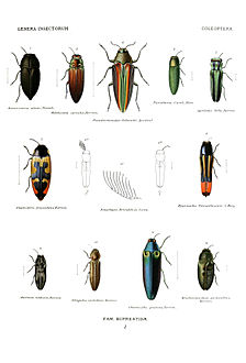Agrilinae (bottom row), Chrysochroinae (top row, left 3), and Buprestinae (others) from Genera Insectorum