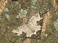 Xanthorhoe fluctuata - Garden carpet - Ларенция обыкновенная (40066583075).jpg