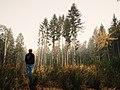 Yosemite-Nationalpark, Vereinigte Staaten (Unsplash).jpg