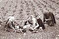 Zamušani na Ptujskem polju 1962 (2).jpg