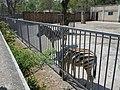 Zebras in Odessa Zoo.jpg