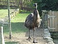 Zoo vigo-010308 026.jpg