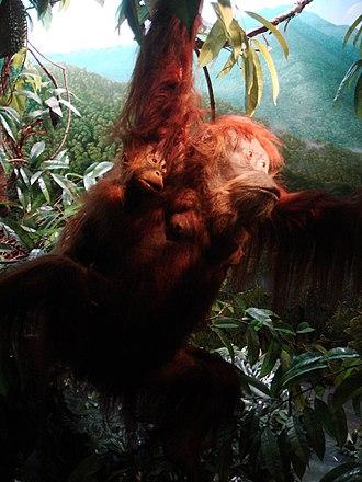 University of Copenhagen Zoological Museum - Image: Zoologisk museum Copenhagen 9