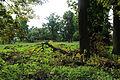 !-20130804-debowa-leka-park-huragan-abri.jpg