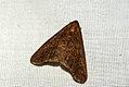 (1935) Mottled Umber (Erannis defoliaria) (4034442470).jpg