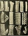 Über japanische und andere Euryalae (1911) (20178896428).jpg