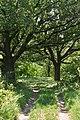 Андріївський ліс 08.jpg