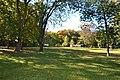 Багатовікові дуби в центральному парку Чернігова.jpg