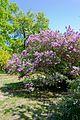 Ботанічний сад ОНУ 08.jpg