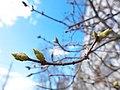 Весна - panoramio (38).jpg