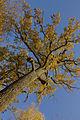 Дуби над Тетерівом (MG 0942).jpg