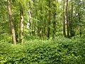 Зауральная роща - panoramio (1).jpg
