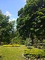 Ландшафт Маріїнського парку.jpg