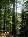 Лес, как я сюда залез - panoramio.jpg