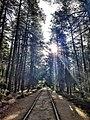 """Национальный парк """"Куршская коса"""" 20200930 102756.jpg"""