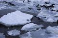 Нерпа на льдине.png