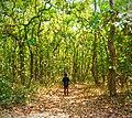 ভাওয়াল জাতীয় উদ্যানের সৌন্দর্য.jpg