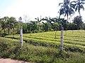 หมู่บ้าน นาพิพาน ต.ปะโค เมือง หนองคาย - panoramio (2).jpg