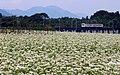 蕎麦の向こう側に - panoramio.jpg
