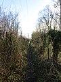 -2019-01-17 Circular footpath across Southrepps common, Norfolk (2).JPG
