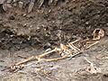 00319 Die Skelette in Sanok in einem Marktplatz.JPG